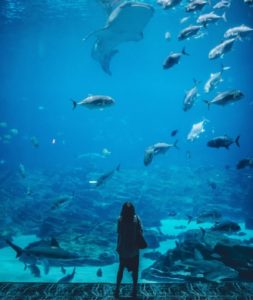 The South Carolina Aquarium is a must to places to visit in Charleston.